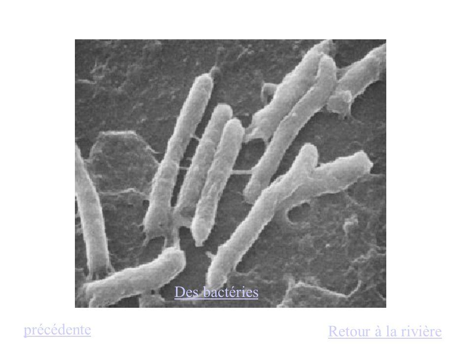 Des bactéries précédente Retour à la rivière