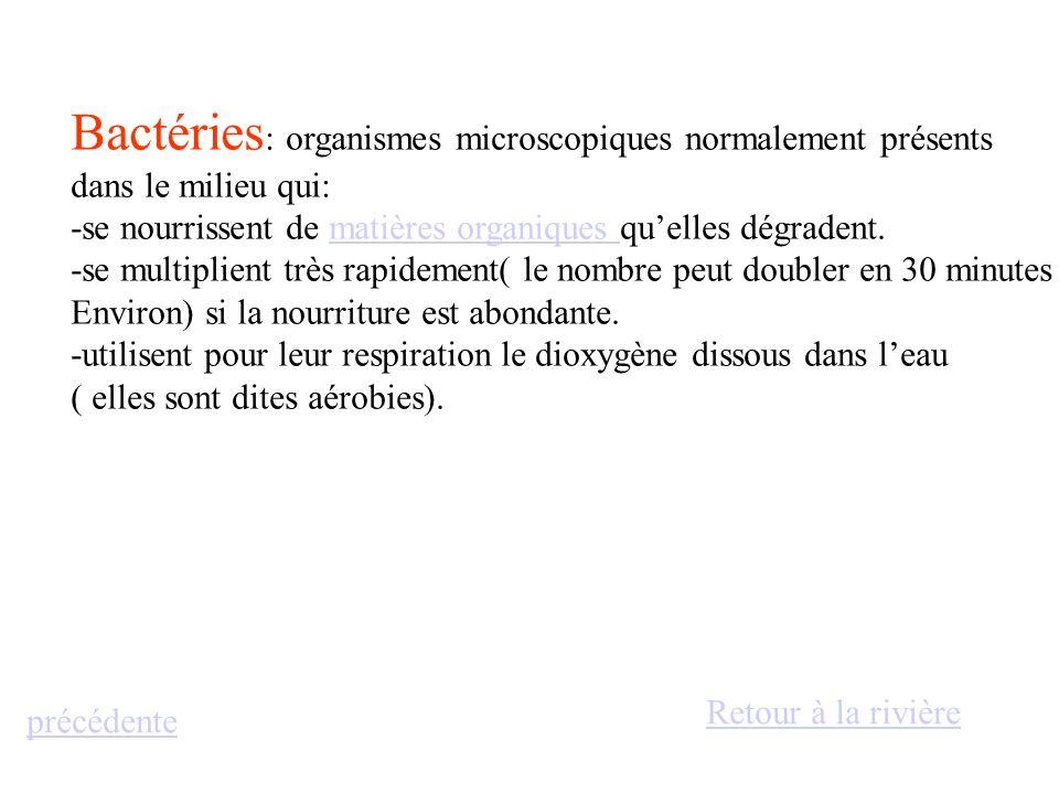 Bactéries: organismes microscopiques normalement présents