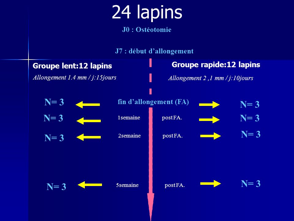 24 lapins N= 3 N= 3 N= 3 N= 3 N= 3 N= 3 N= 3 N= 3 J0 : Ostéotomie