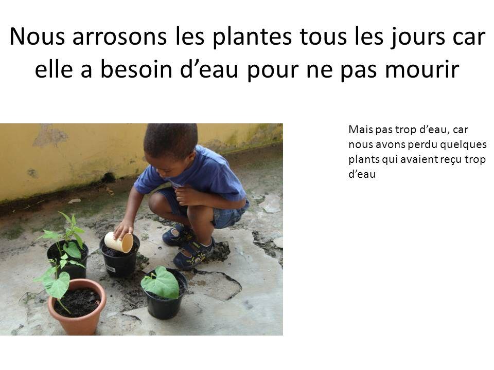 Nous arrosons les plantes tous les jours car elle a besoin d'eau pour ne pas mourir