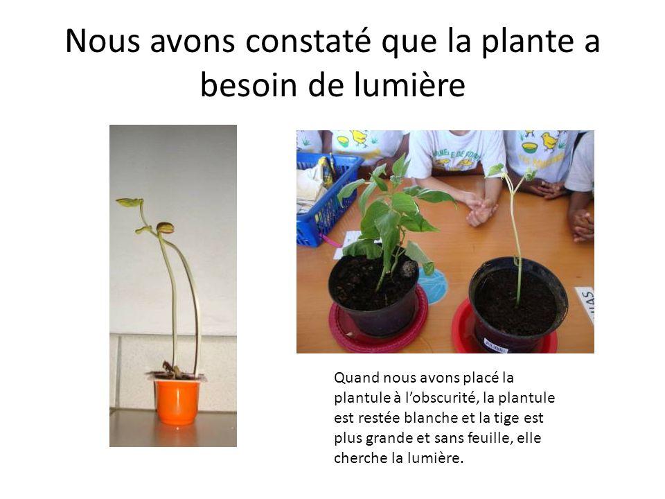 Nous avons constaté que la plante a besoin de lumière