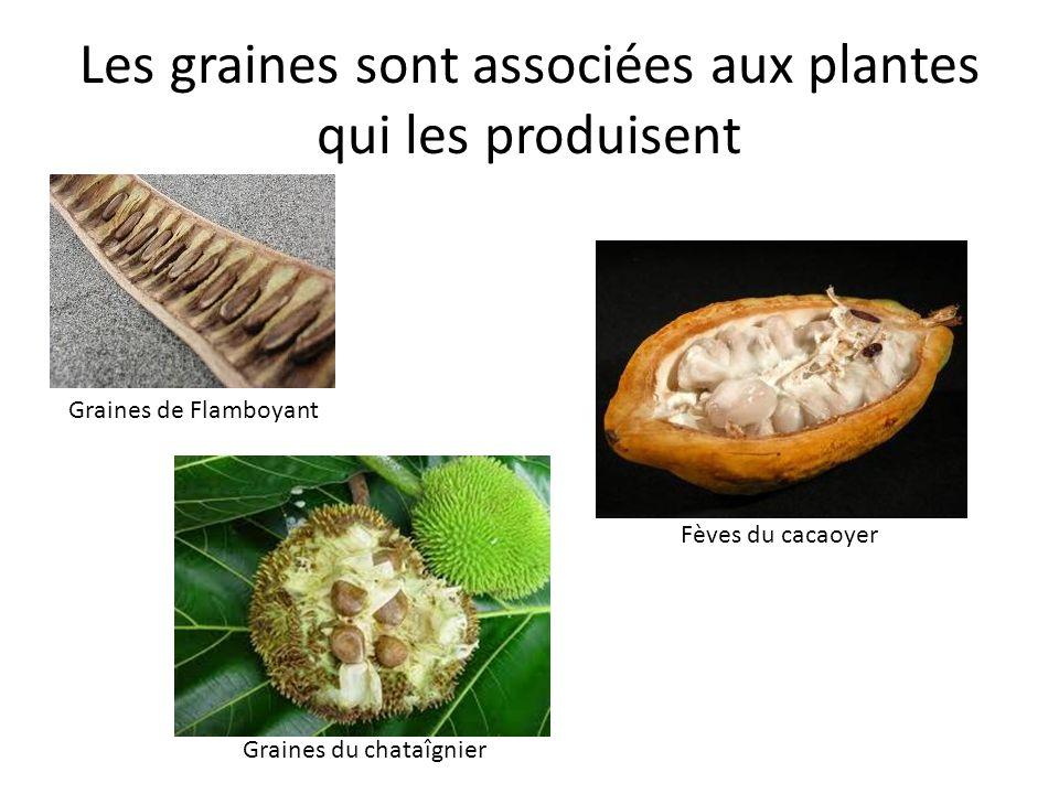 Les graines sont associées aux plantes qui les produisent