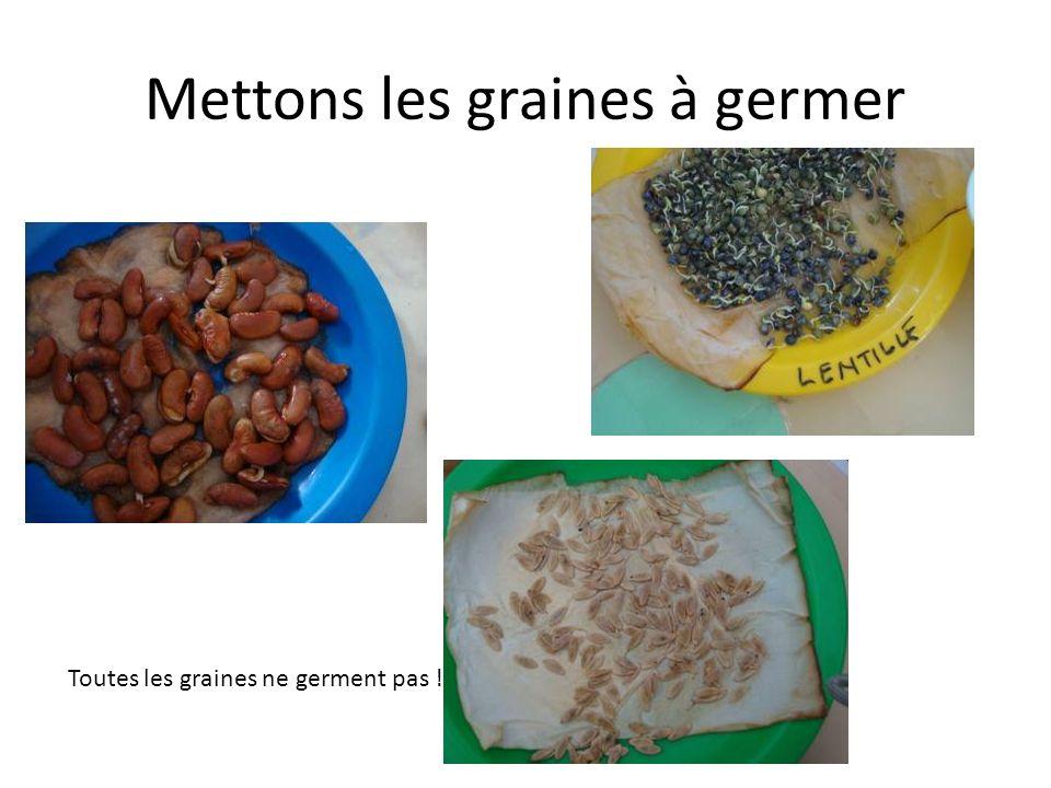Mettons les graines à germer