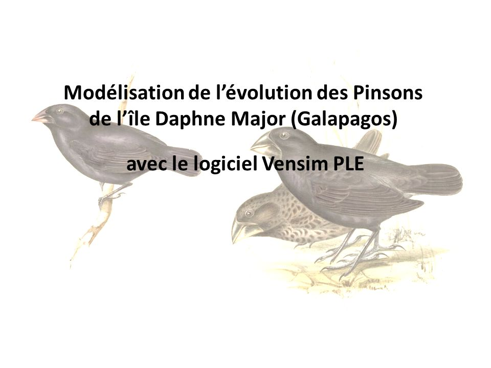 Modélisation de l'évolution des Pinsons