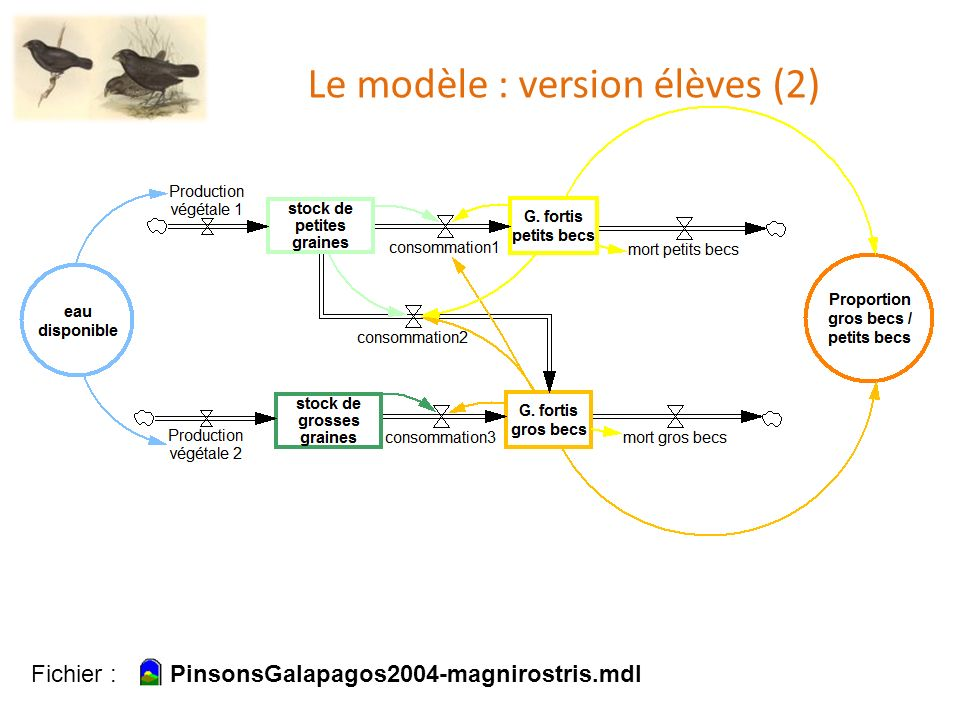 Le modèle : version élèves (2)