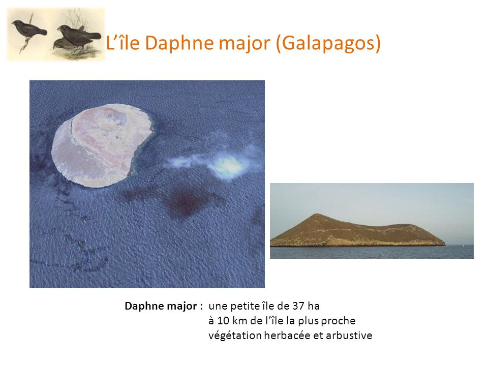 L'île Daphne major (Galapagos)