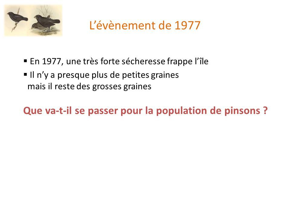 L'évènement de 1977 En 1977, une très forte sécheresse frappe l'île. Il n'y a presque plus de petites graines.