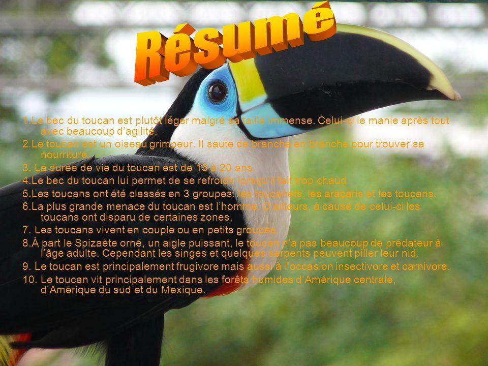 Résumé 1.Le bec du toucan est plutôt léger malgré sa taille immense. Celui-ci le manie après tout avec beaucoup d'agilité.