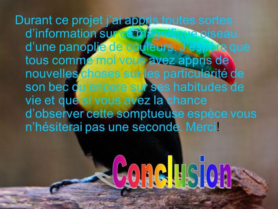 Durant ce projet j'ai appris toutes sortes d'information sur ce magnifique oiseau d'une panoplie de couleurs. J'espère que tous comme moi vous avez appris de nouvelles choses sur les particularité de son bec ou encore sur ses habitudes de vie et que si vous avez la chance d'observer cette somptueuse espèce vous n'hésiterai pas une seconde. Merci!