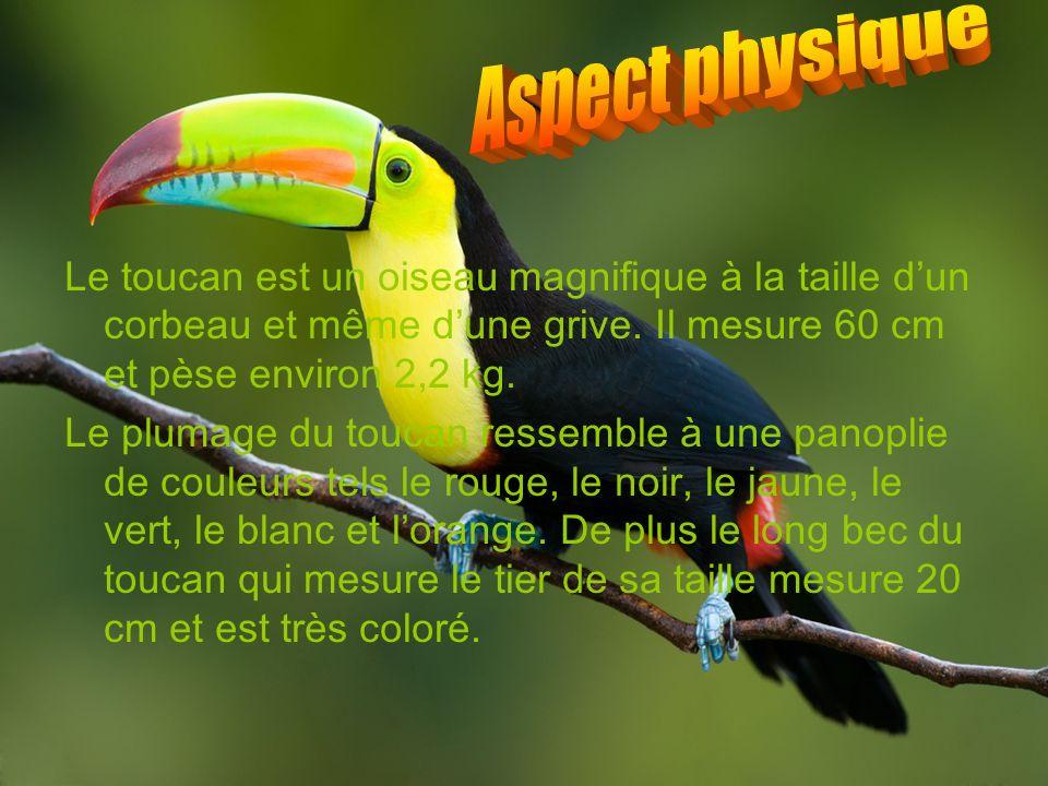 Aspect physique Le toucan est un oiseau magnifique à la taille d'un corbeau et même d'une grive. Il mesure 60 cm et pèse environ 2,2 kg.