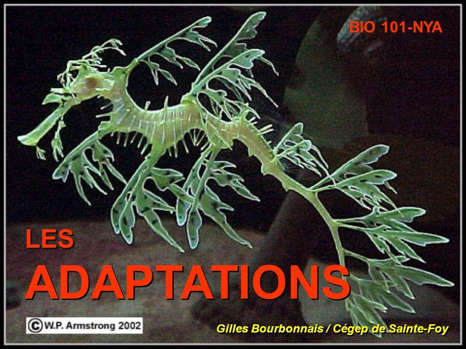 BIO 101-NYA LES ADAPTATIONS Gilles Bourbonnais / Cégep de Sainte-Foy