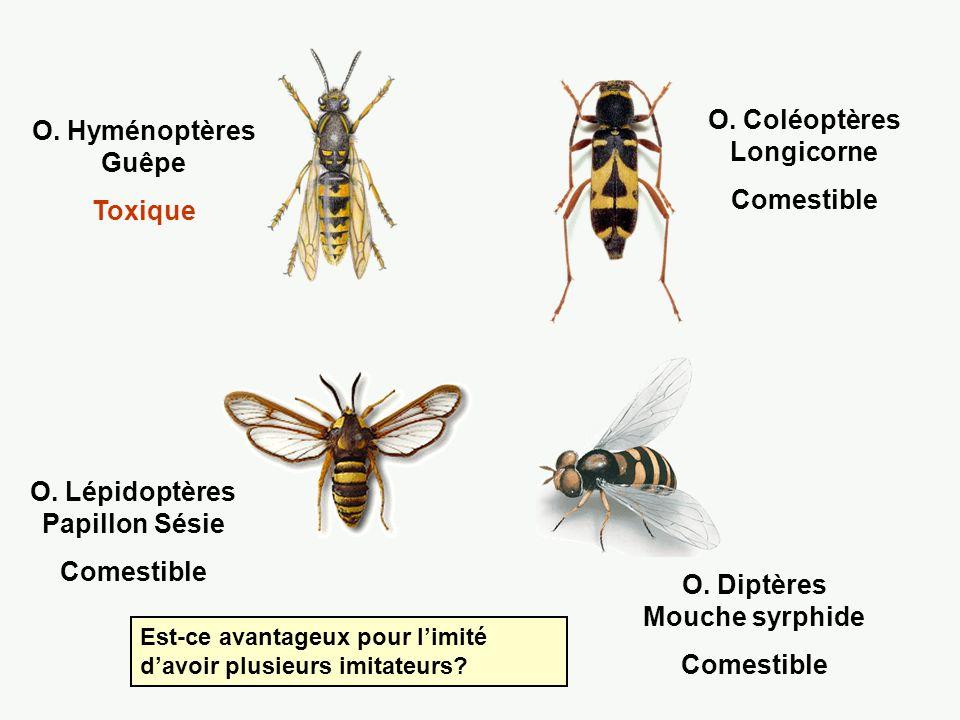 O. Coléoptères Longicorne Comestible O. Hyménoptères Guêpe Toxique
