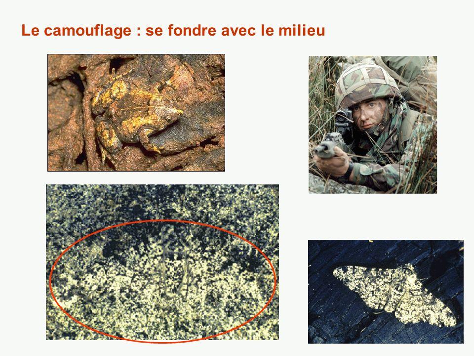 Le camouflage : se fondre avec le milieu