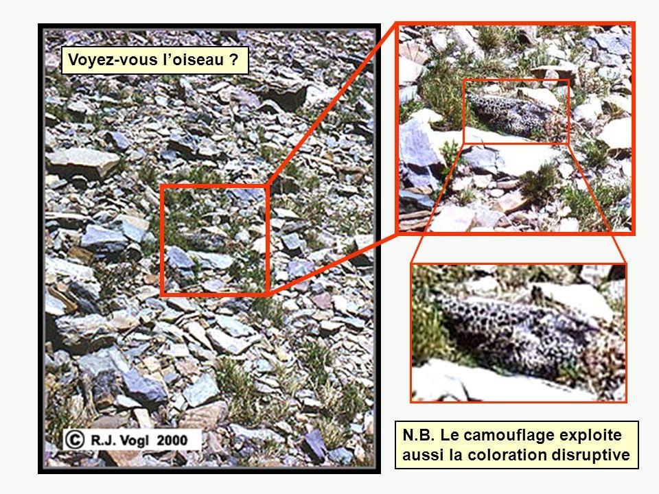 Voyez-vous l'oiseau N.B. Le camouflage exploite aussi la coloration disruptive