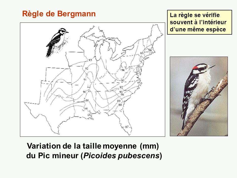 Variation de la taille moyenne (mm) du Pic mineur (Picoides pubescens)