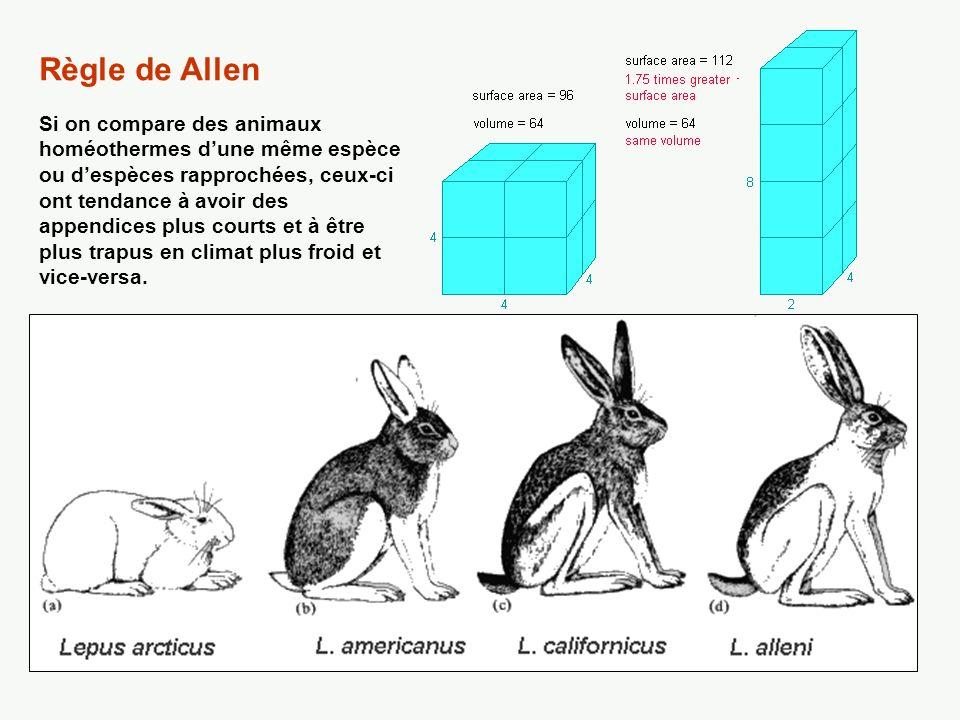 Règle de Allen