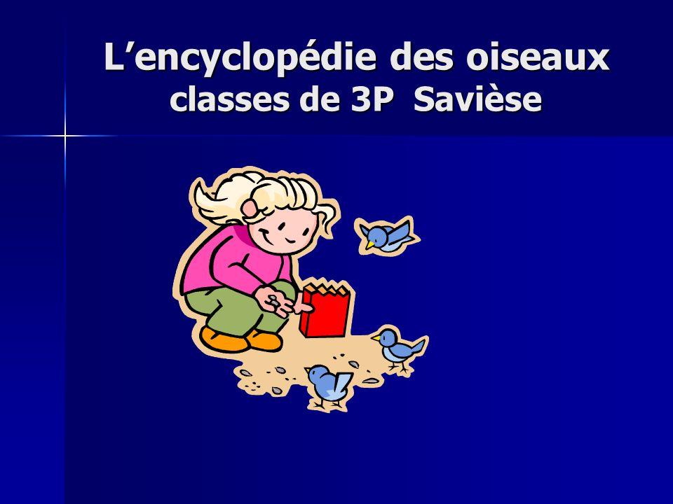 L'encyclopédie des oiseaux classes de 3P Savièse