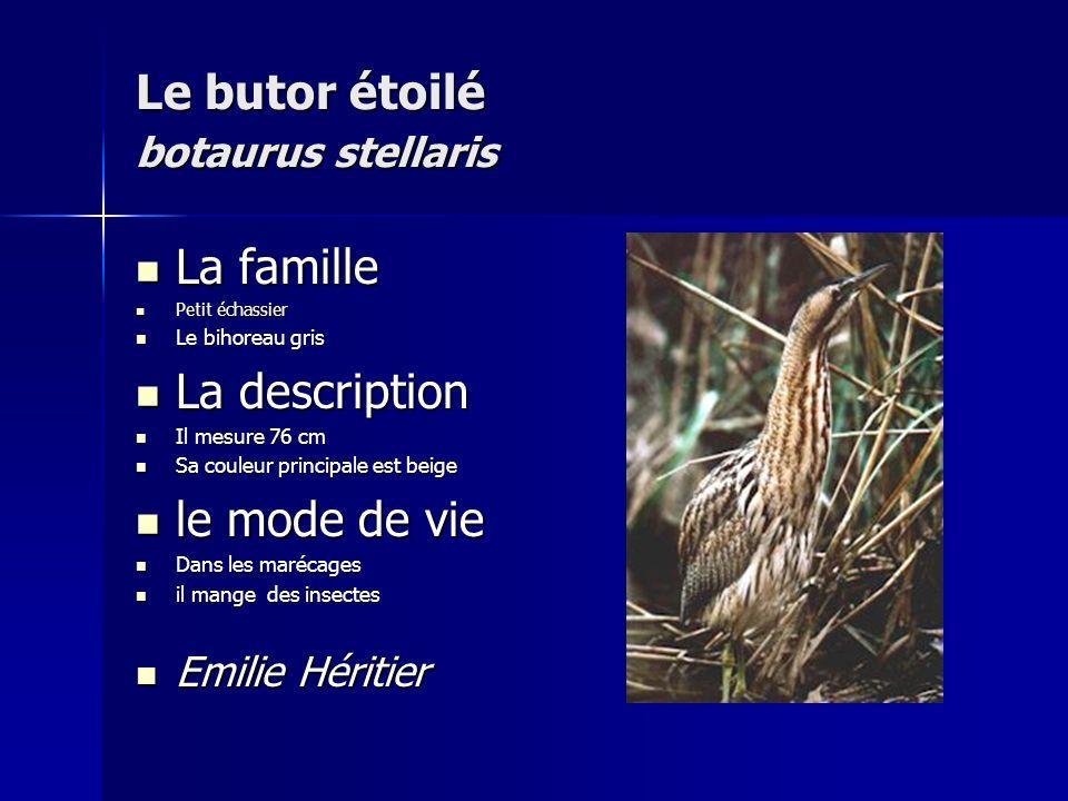 Le butor étoilé botaurus stellaris