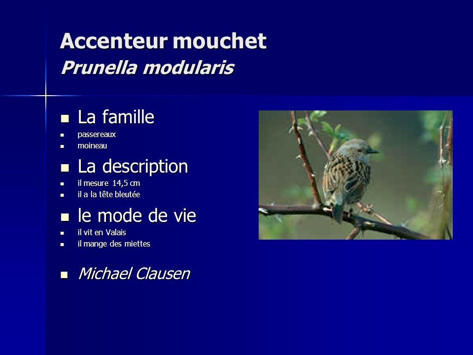 Accenteur mouchet Prunella modularis