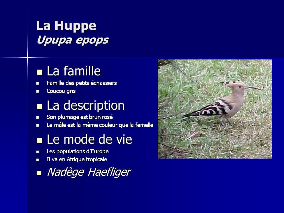 La H uppe Upupa epops La famille La description Le mode de vie