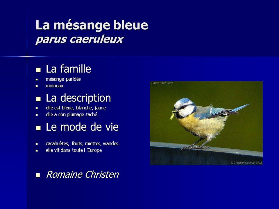 La mésange bleue parus caeruleux