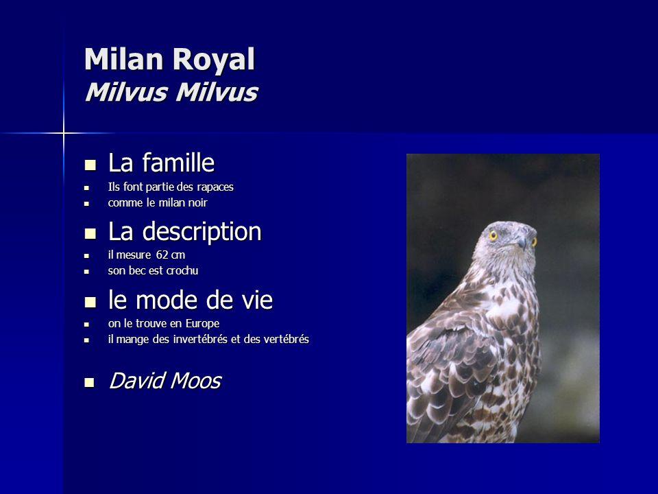 Milan Royal Milvus Milvus