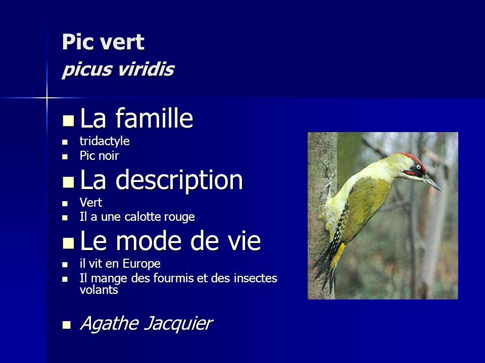 La famille La description Le mode de vie Pic vert picus viridis