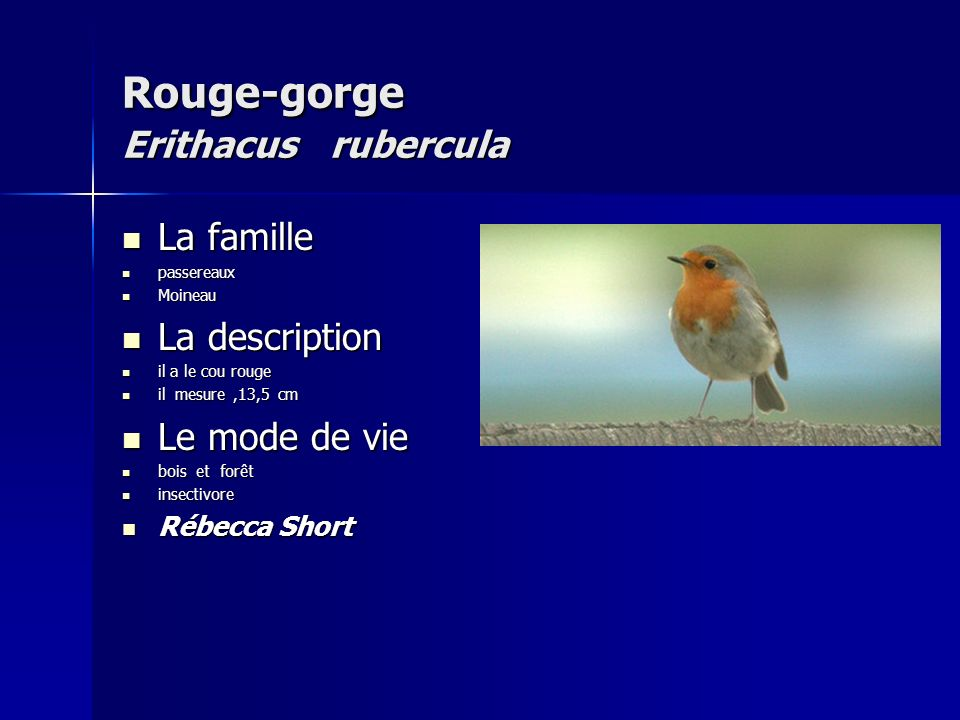 Rouge-gorge Erithacus rubercula