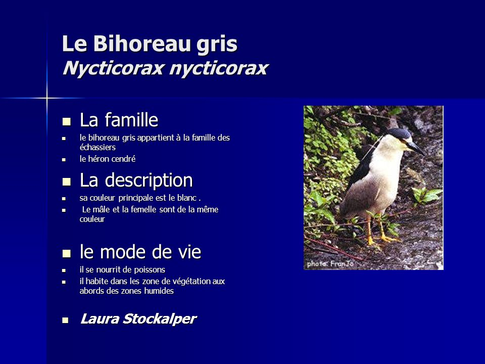 Le Bihoreau gris Nycticorax nycticorax