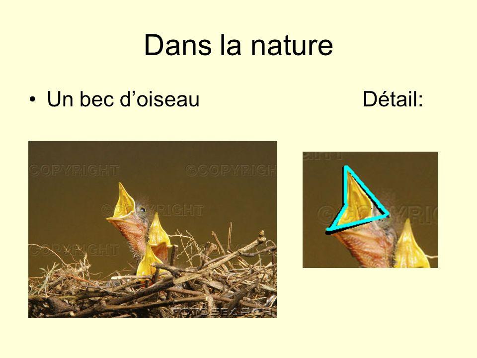 Dans la nature Un bec d'oiseau Détail: