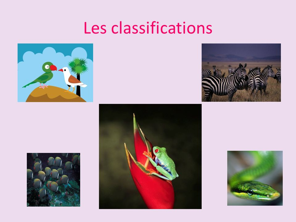 Les classifications
