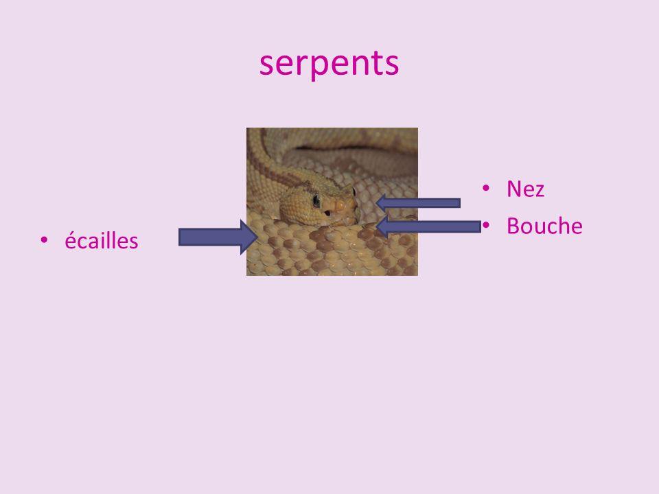 serpents Nez Bouche écailles