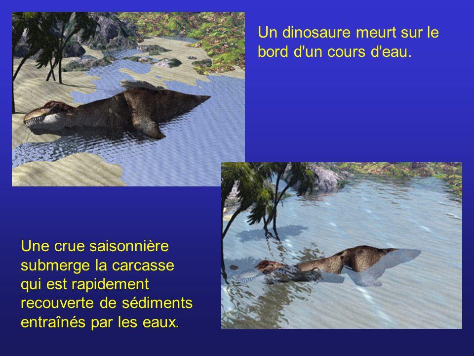Un dinosaure meurt sur le bord d un cours d eau.