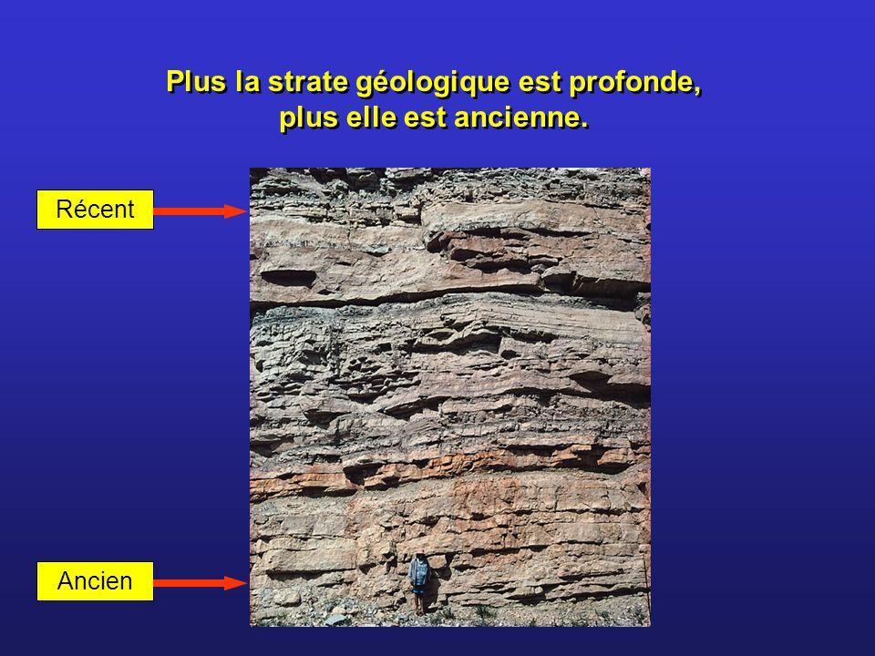 Plus la strate géologique est profonde, plus elle est ancienne.