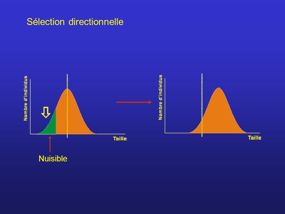 Sélection directionnelle