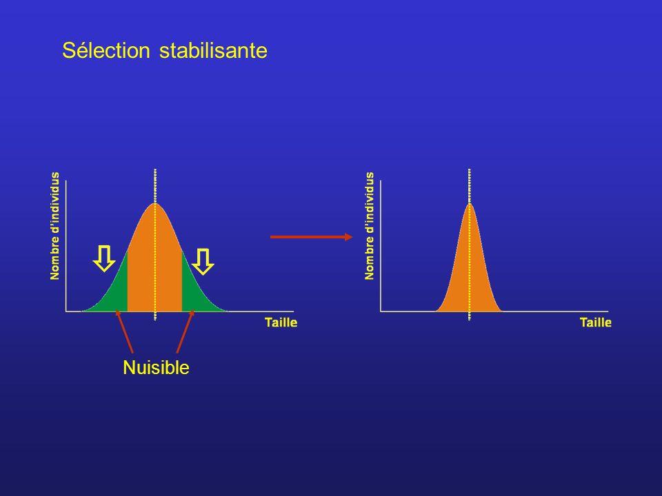 Sélection stabilisante