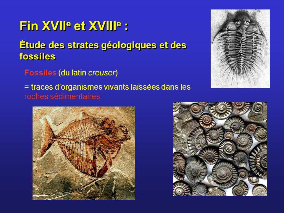 Fin XVIIe et XVIIIe : Étude des strates géologiques et des fossiles