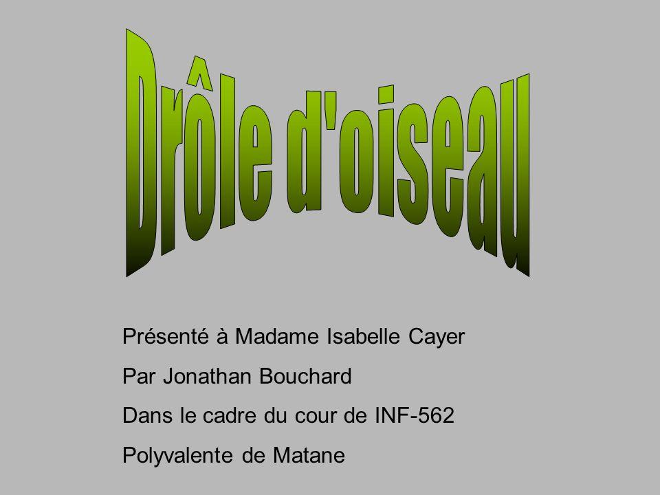 Drôle d oiseau Présenté à Madame Isabelle Cayer Par Jonathan Bouchard