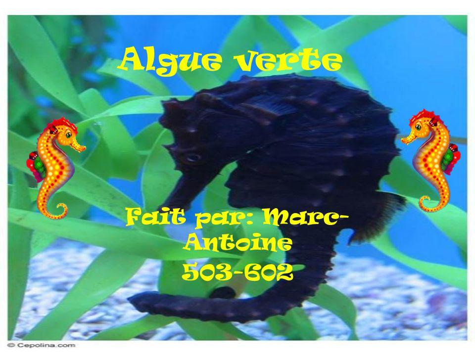 Fait par: Marc-Antoine 503-602