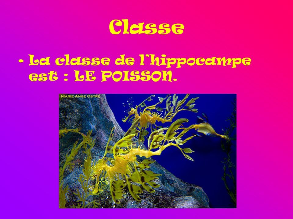 Classe La classe de l'hippocampe est : LE POISSON.