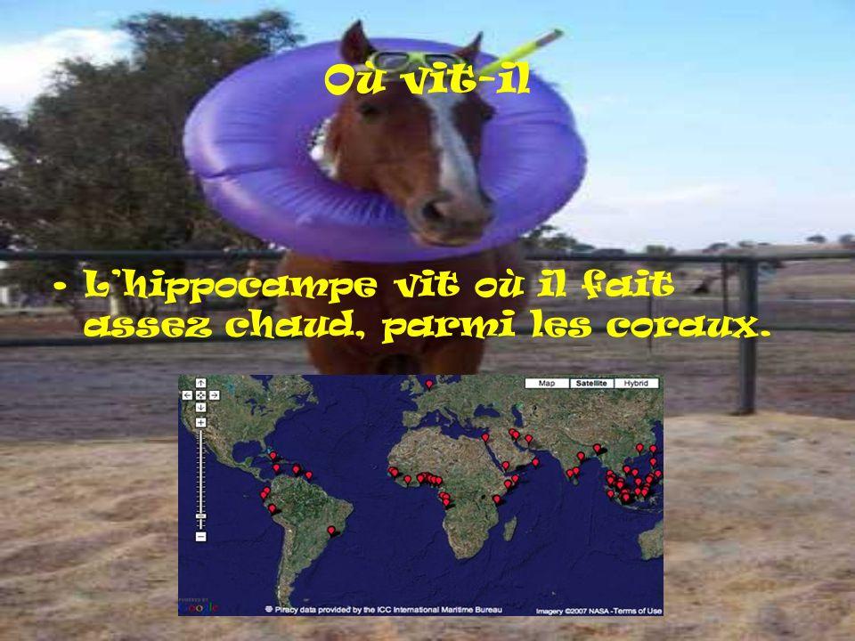 Où vit-il L'hippocampe vit où il fait assez chaud, parmi les coraux.