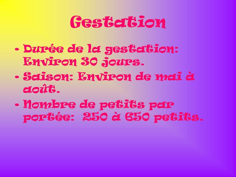 Gestation Durée de la gestation: Environ 30 jours.