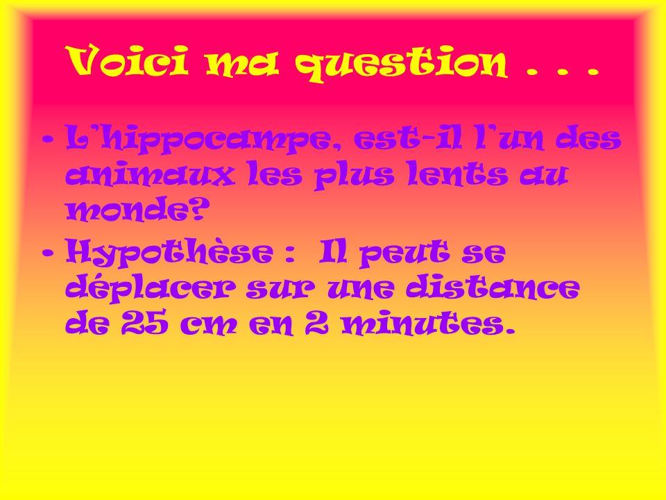 Voici ma question . . . L'hippocampe, est-il l'un des animaux les plus lents au monde
