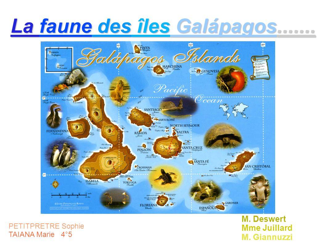 La faune des îles Galápagos.......