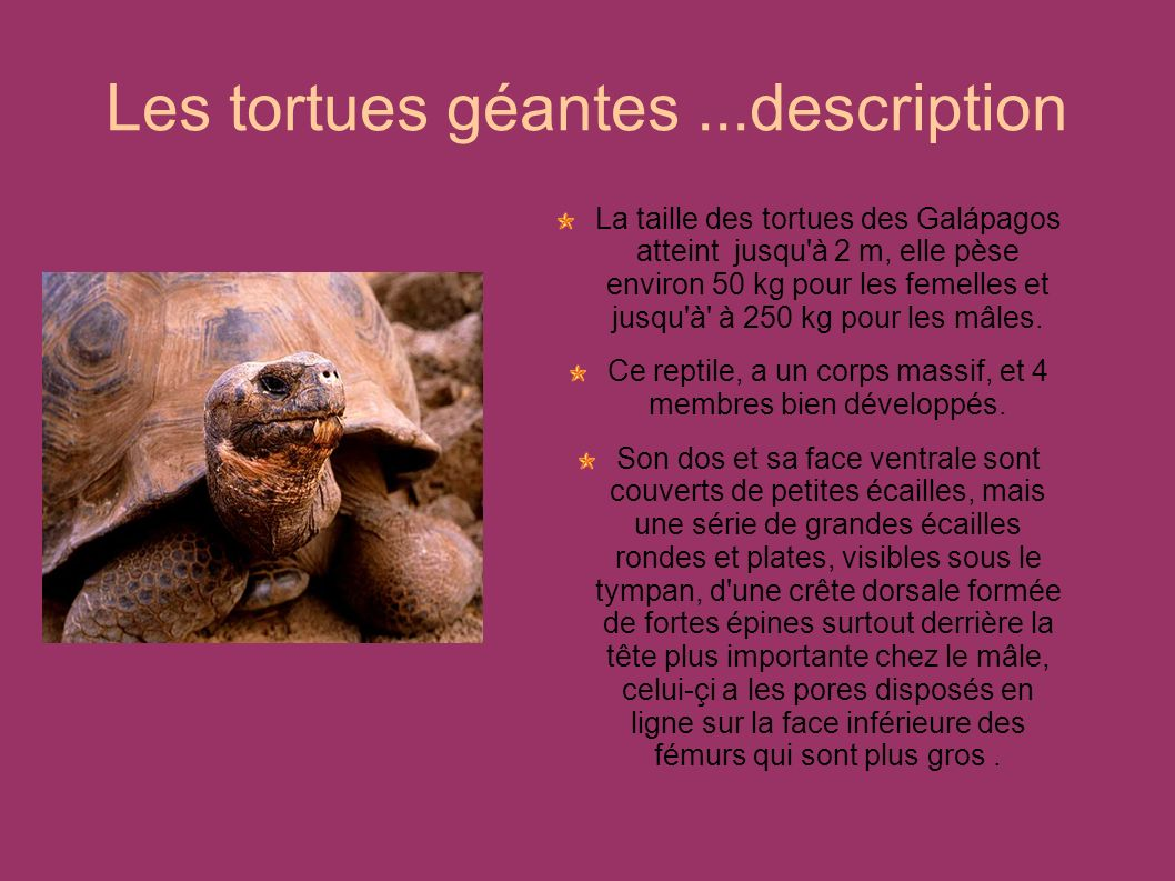 Les tortues géantes ...description