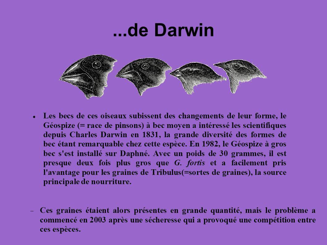...de Darwin