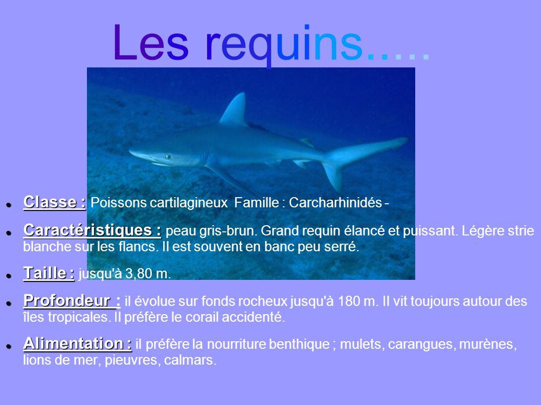 Les requins..... Classe : Poissons cartilagineux Famille : Carcharhinidés -