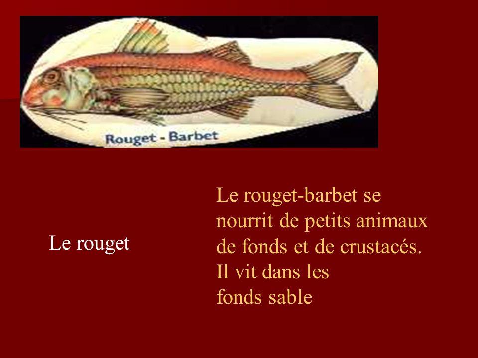 Le rouget-barbet se nourrit de petits animaux de fonds et de crustacés