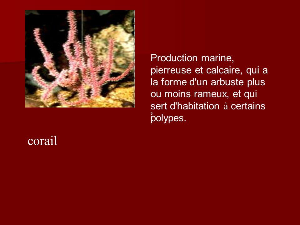 Production marine, pierreuse et calcaire, qui a la forme d un arbuste plus ou moins rameux, et qui sert d habitation à certains polypes.