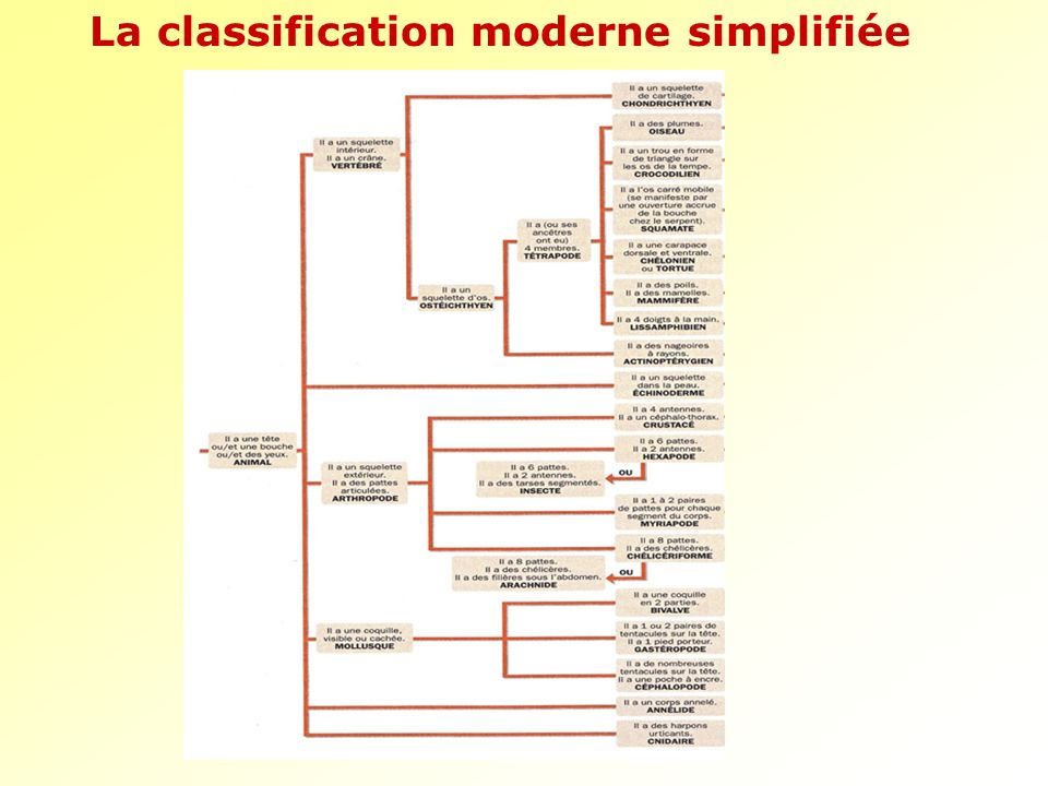 La classification moderne simplifiée